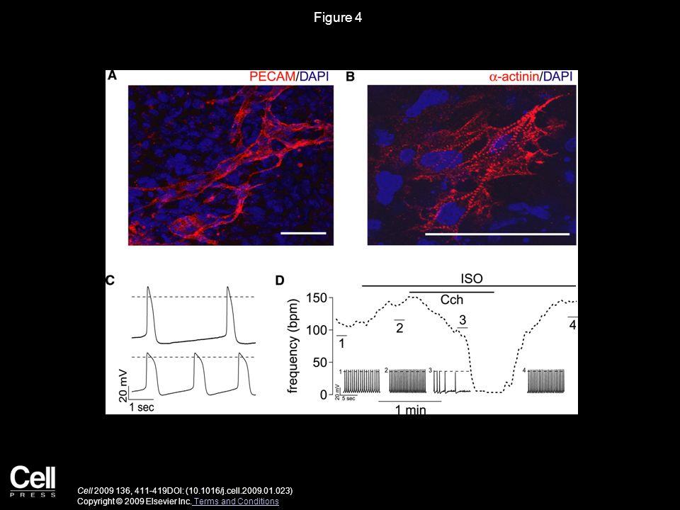 Figure 4 Cell 2009 136, 411-419DOI: (10.1016/j.cell.2009.01.023) Copyright © 2009 Elsevier Inc.