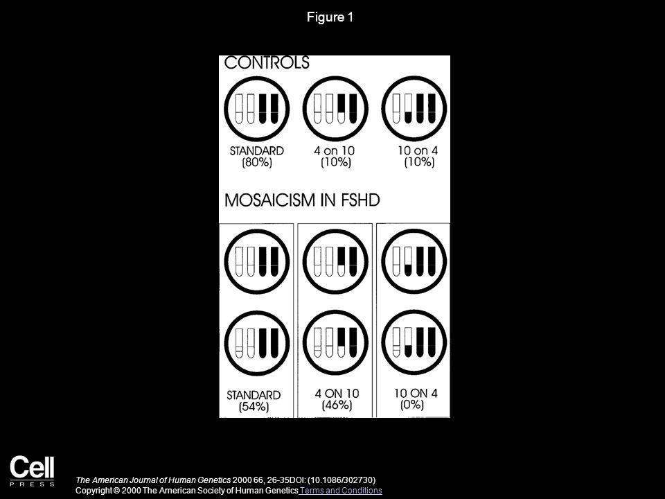 Figure 2 The American Journal of Human Genetics 2000 66, 26-35DOI: (10.1086/302730) Copyright © 2000 The American Society of Human Genetics Terms and Conditions Terms and Conditions