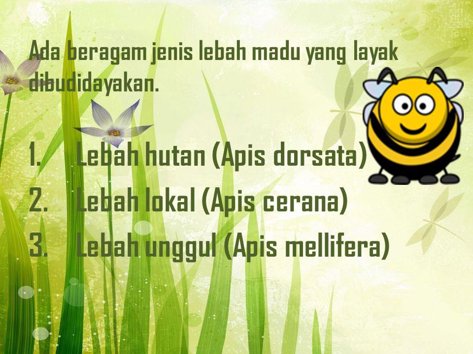 Ada beragam jenis lebah madu yang layak dibudidayakan.