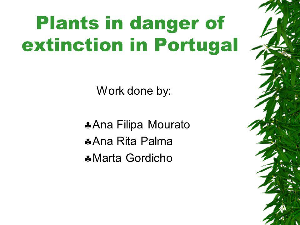 Plants in danger of extinction in Portugal Portuguese name:  Cedro-do-mato Latin name:  Juniperus brevifolia