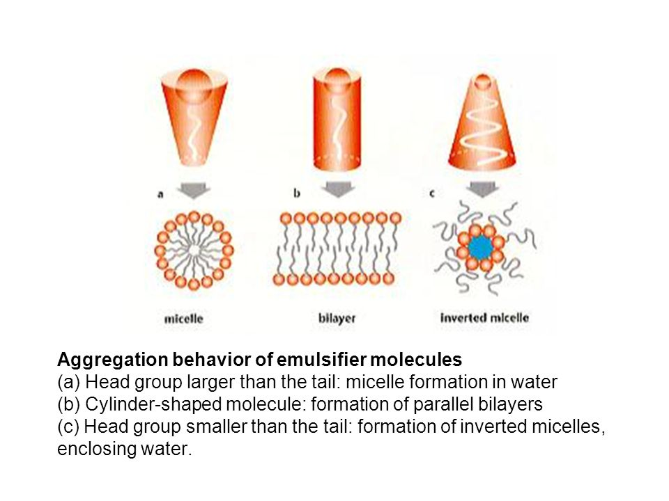 Aggregation behavior of emulsifier molecules (a) Head group larger than the tail: micelle formation in water (b) Cylinder-shaped molecule: formation of parallel bilayers (c) Head group smaller than the tail: formation of inverted micelles, enclosing water.