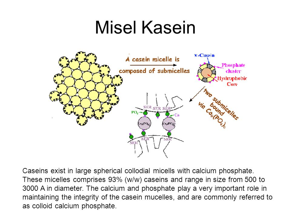 Misel Kasein Caseins exist in large spherical collodial micells with calcium phosphate.