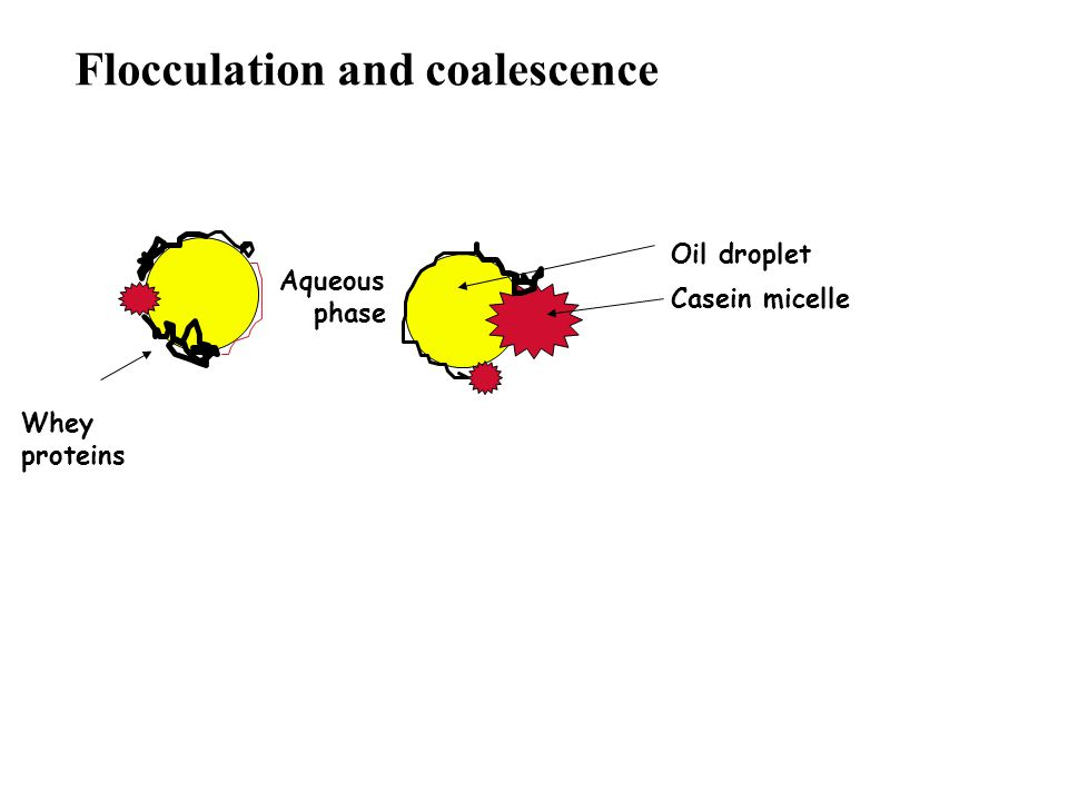 Flocculation and coalescence Aqueous phase Whey proteins Oil droplet Casein micelle