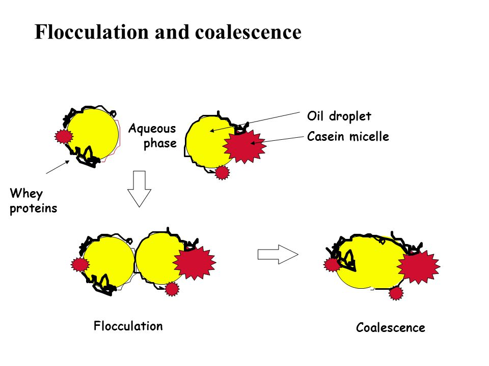 Flocculation and coalescence Aqueous phase Flocculation Coalescence Whey proteins Oil droplet Casein micelle