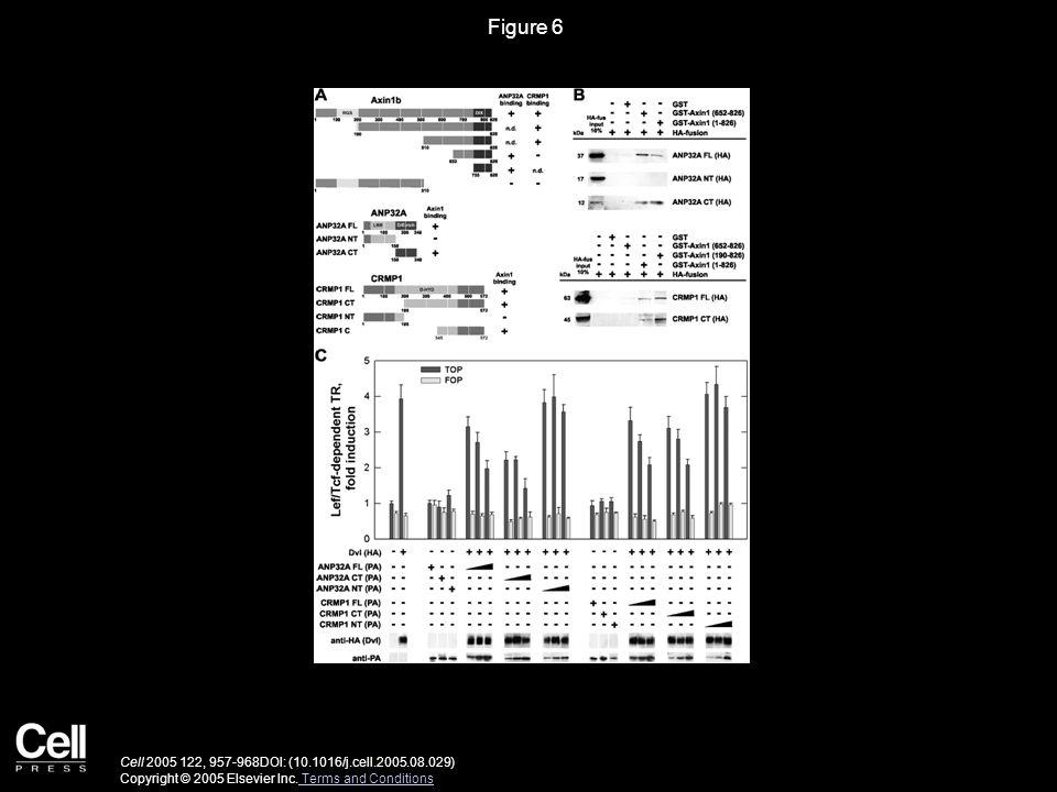Figure 6 Cell 2005 122, 957-968DOI: (10.1016/j.cell.2005.08.029) Copyright © 2005 Elsevier Inc.