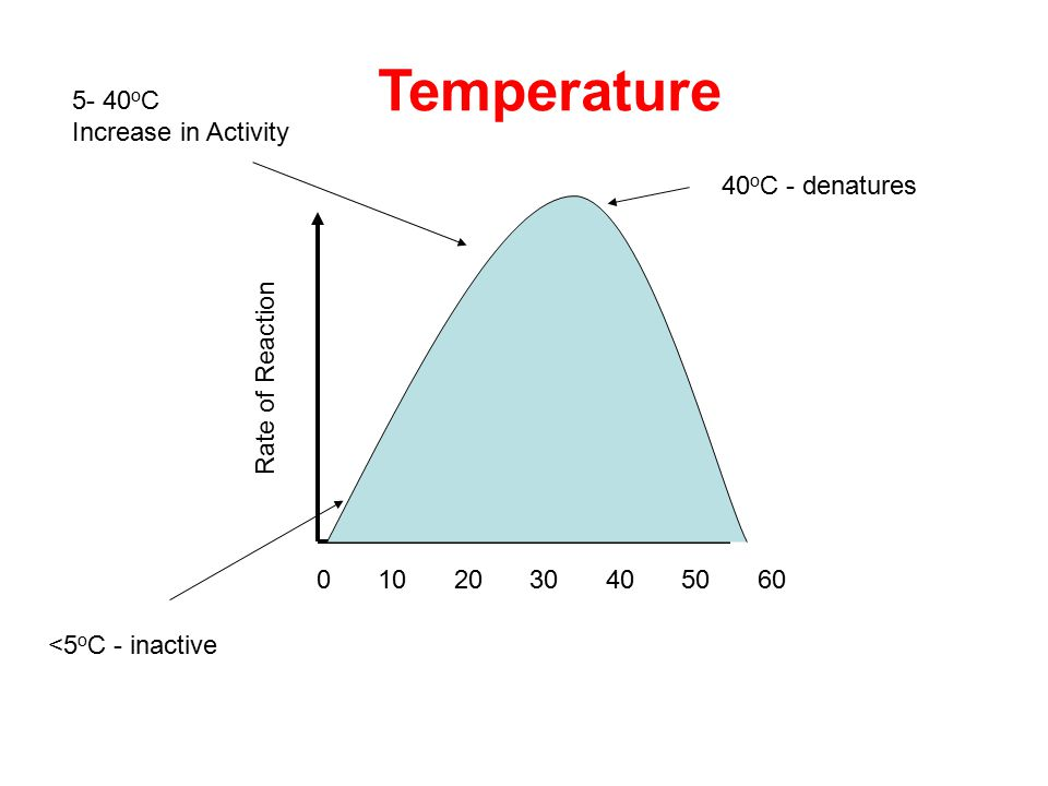 Rate of Reaction Temperature 0203050104060 40 o C - denatures 5- 40 o C Increase in Activity <5 o C - inactive