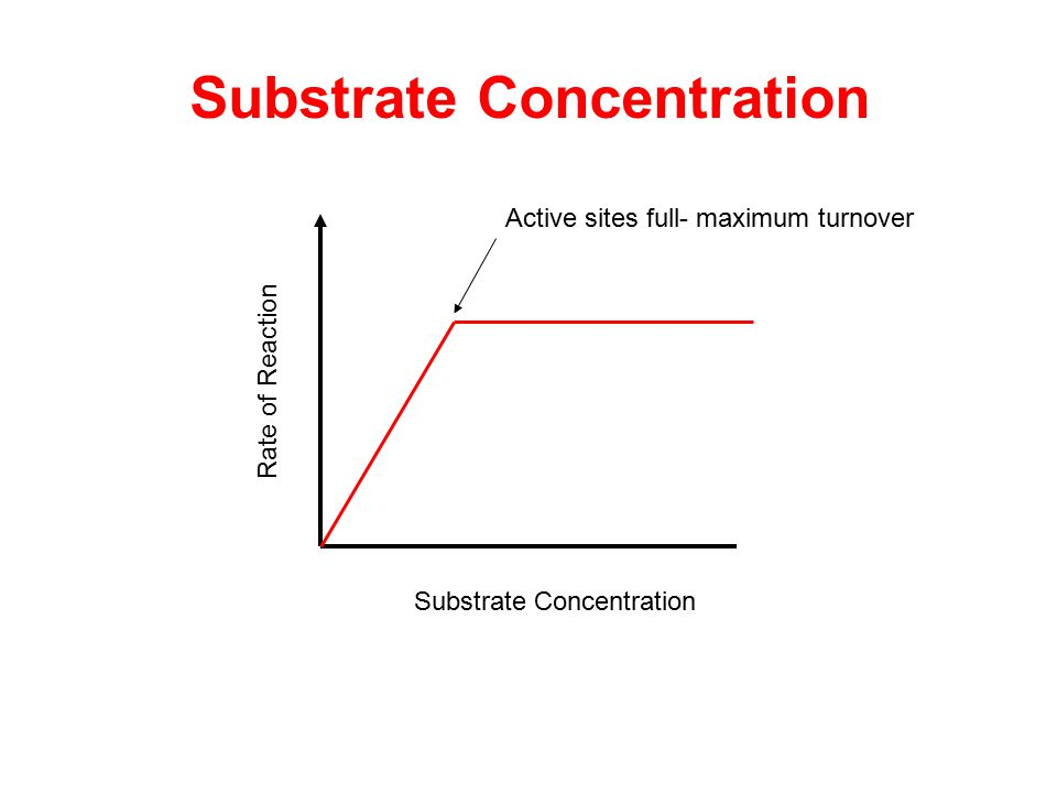 Rate of Reaction Substrate Concentration Active sites full- maximum turnover