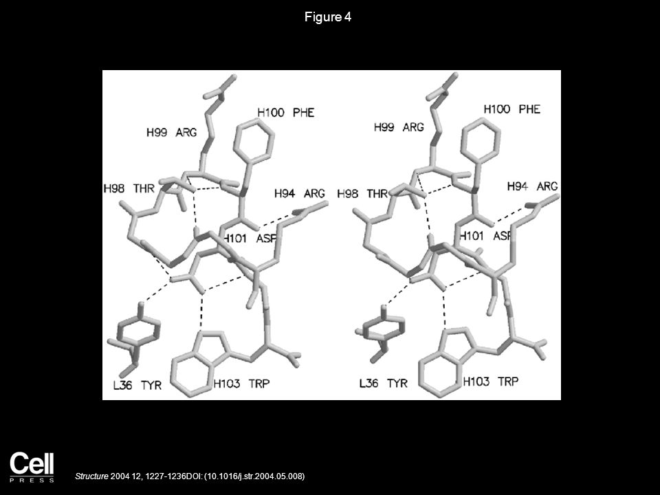 Figure 4 Structure 2004 12, 1227-1236DOI: (10.1016/j.str.2004.05.008)