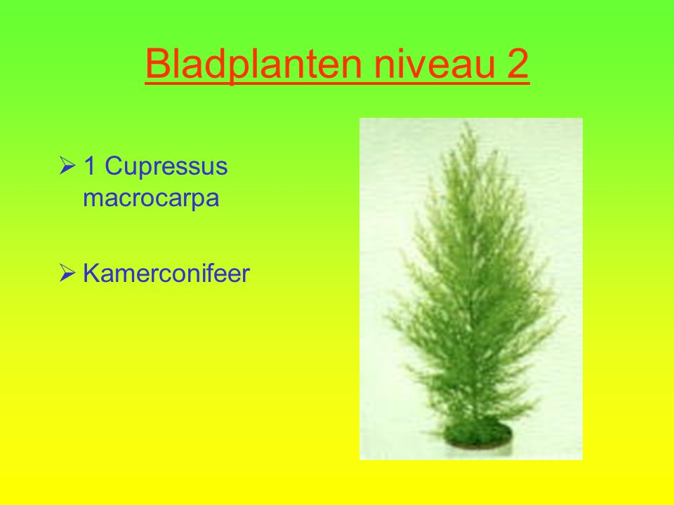 Kamerplanten Bladplanten niveau 2