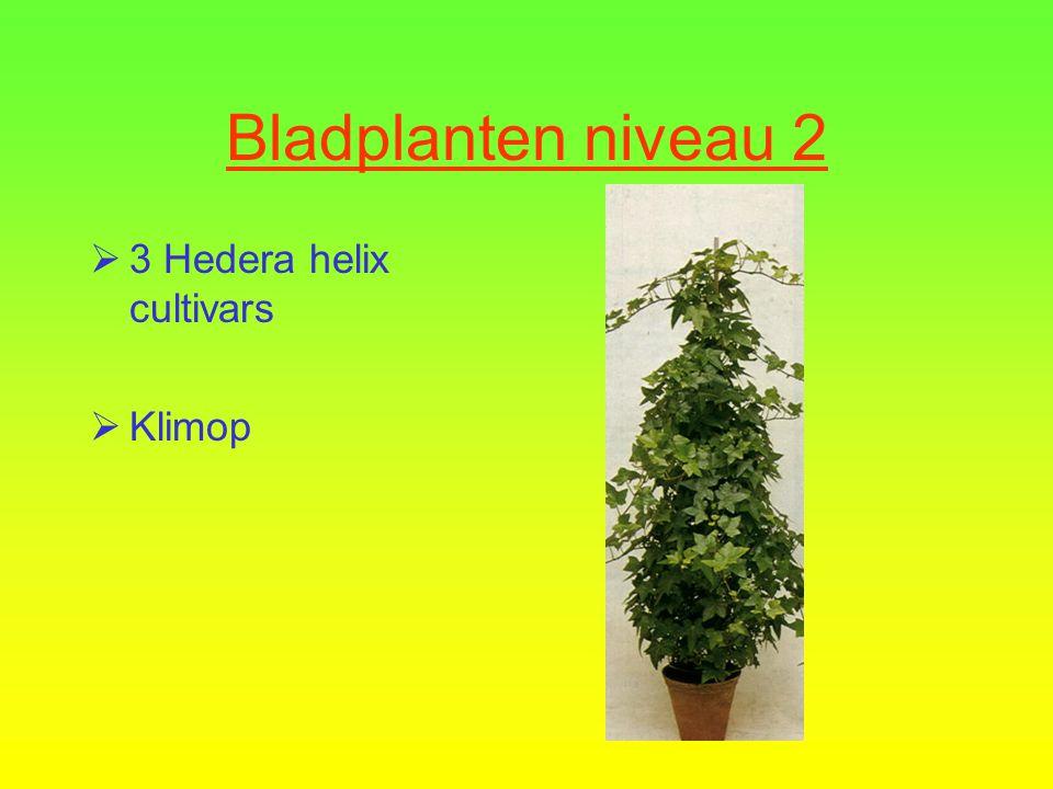 Bladplanten niveau 2  2 Euonymus japonicus cultivars  Kardinaalsmuts