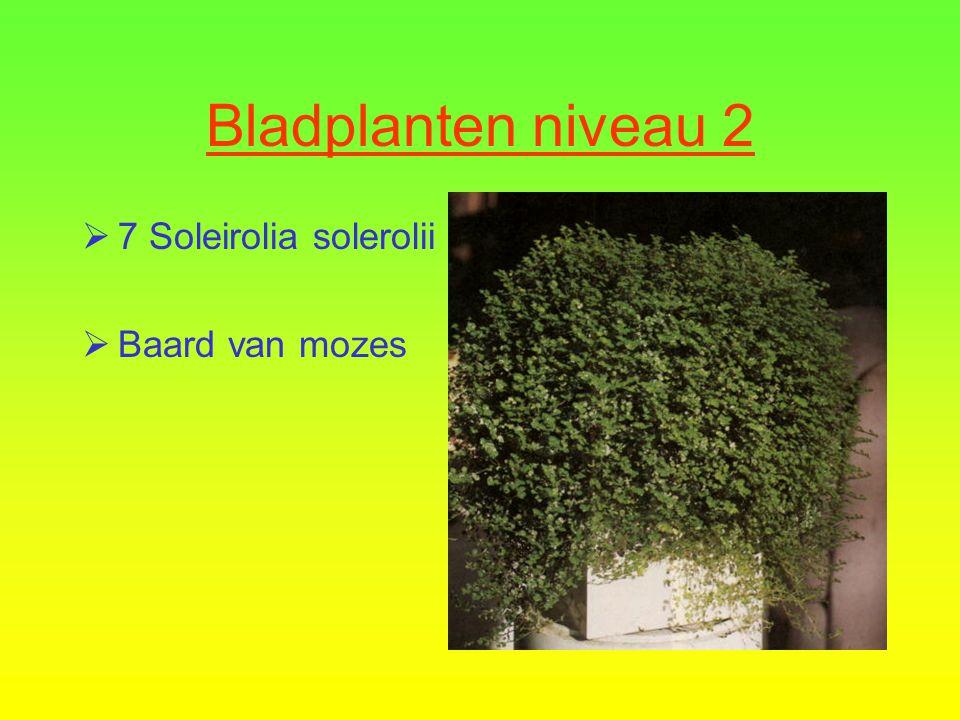 Bladplanten niveau 2  6 Peperomia obtusifolia  Peperomia