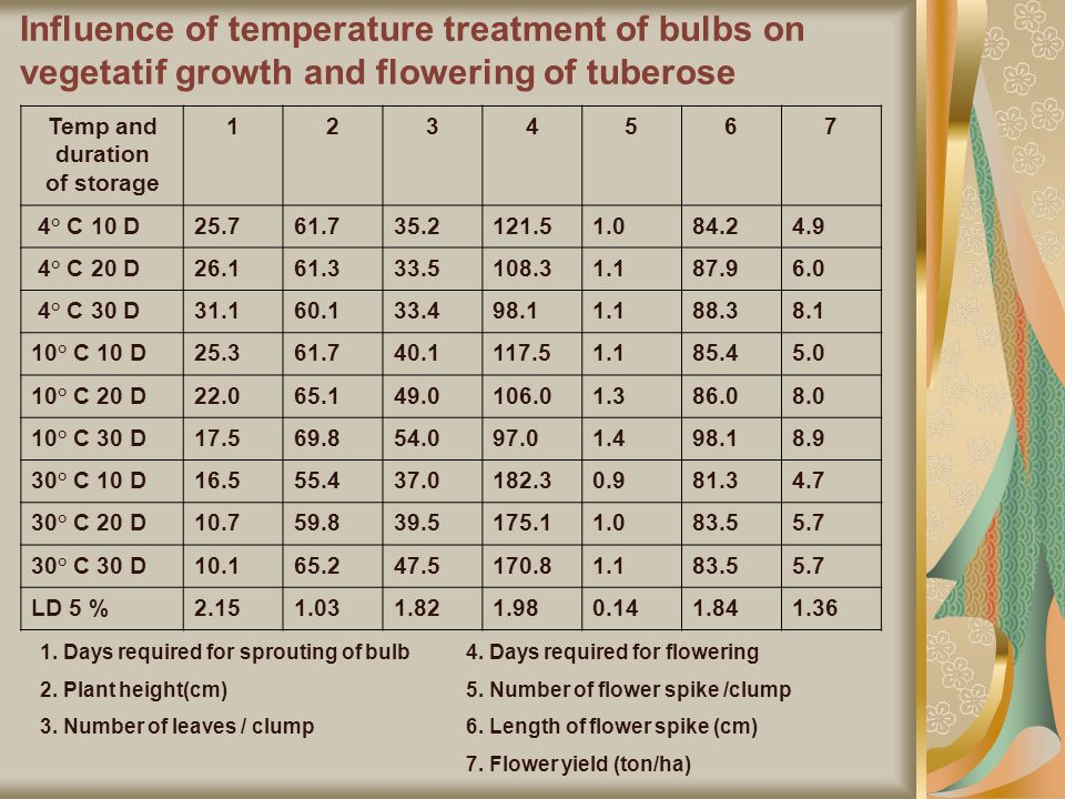 Influence of temperature treatment of bulbs on vegetatif growth and flowering of tuberose Temp and duration of storage 1234567 4° C 10 D25.761.735.2121.51.084.24.9 4° C 20 D26.161.333.5108.31.187.96.0 4° C 30 D31.160.133.498.11.188.38.1 10° C 10 D25.361.740.1117.51.185.45.0 10° C 20 D22.065.149.0106.01.386.08.0 10° C 30 D17.569.854.097.01.498.18.9 30° C 10 D16.555.437.0182.30.981.34.7 30° C 20 D10.759.839.5175.11.083.55.7 30° C 30 D10.165.247.5170.81.183.55.7 LD 5 %2.151.031.821.980.141.841.36 1.