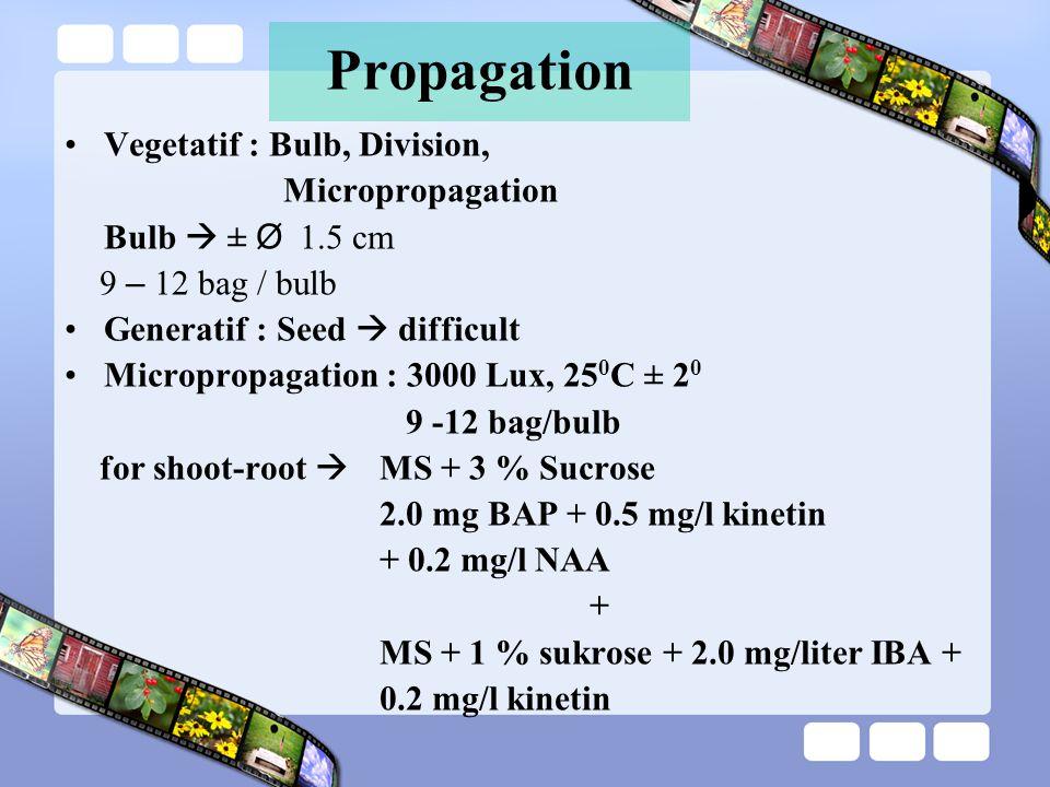 Propagation Vegetatif : Bulb, Division, Micropropagation Bulb  ± Ø 1.5 cm 9 – 12 bag / bulb Generatif : Seed  difficult Micropropagation : 3000 Lux, 25 0 C ± 2 0 9 -12 bag/bulb for shoot-root  MS + 3 % Sucrose 2.0 mg BAP + 0.5 mg/l kinetin + 0.2 mg/l NAA + MS + 1 % sukrose + 2.0 mg/liter IBA + 0.2 mg/l kinetin