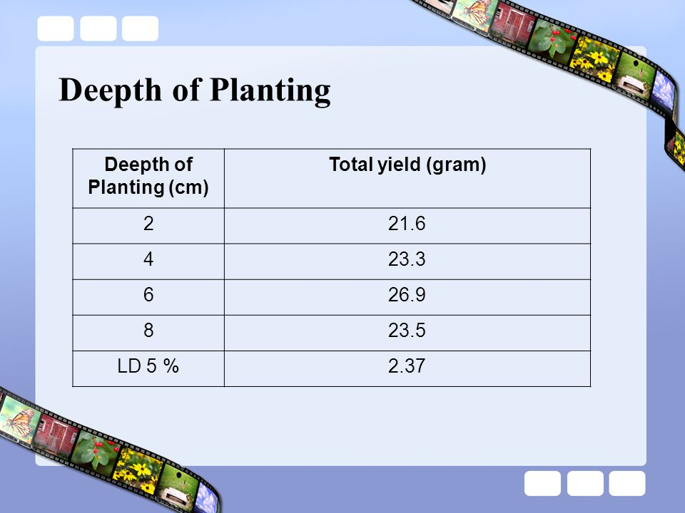 Deepth of Planting Deepth of Planting (cm) Total yield (gram) 221.6 423.3 626.9 823.5 LD 5 %2.37