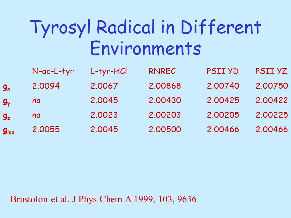 Tyrosyl Radical in Different Environments N-ac-L-tyrL-tyr-HClRNRECPSII YD PSII YZ g x 2.00942.00672.008682.00740 2.00750 g y na2.00452.004302.00425 2.00422 g z na2.00232.002032.00205 2.00225 g iso 2.00552.00452.005002.00466 2.00466 Brustolon et al.