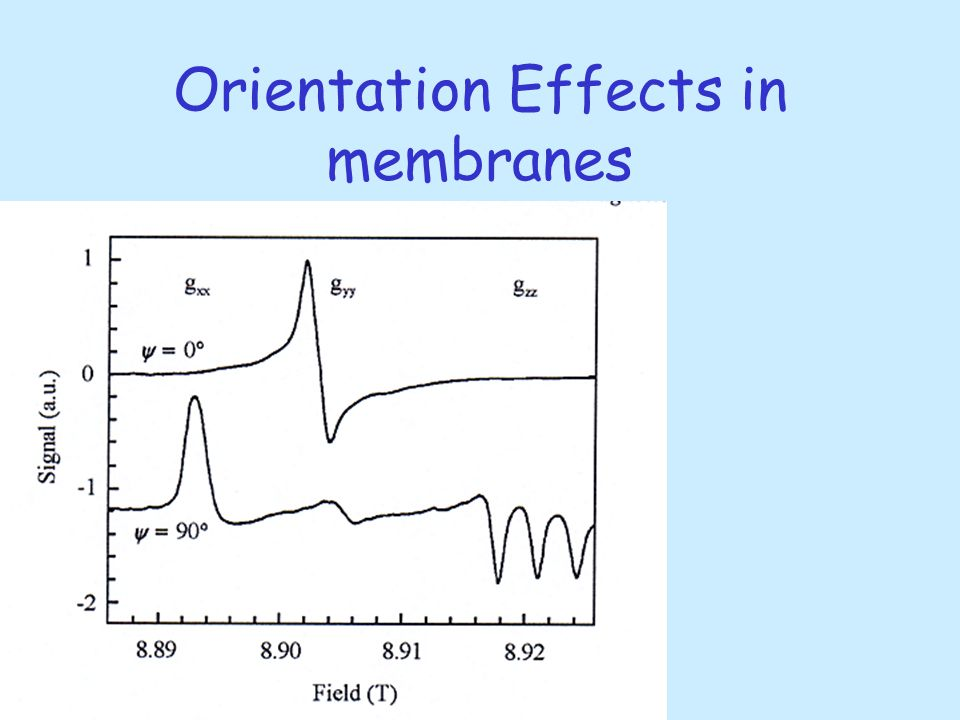 Orientation Effects in membranes