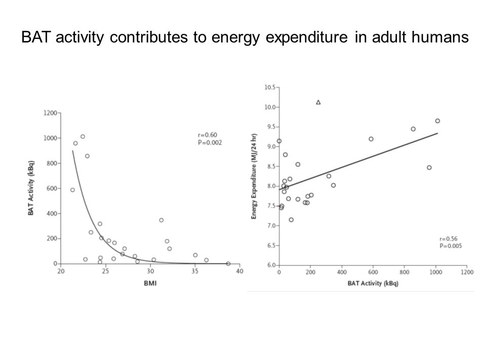 BAT activity contributes to energy expenditure in adult humans