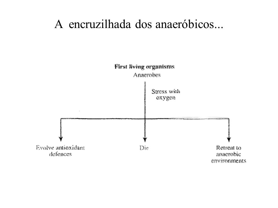 A encruzilhada dos anaeróbicos...