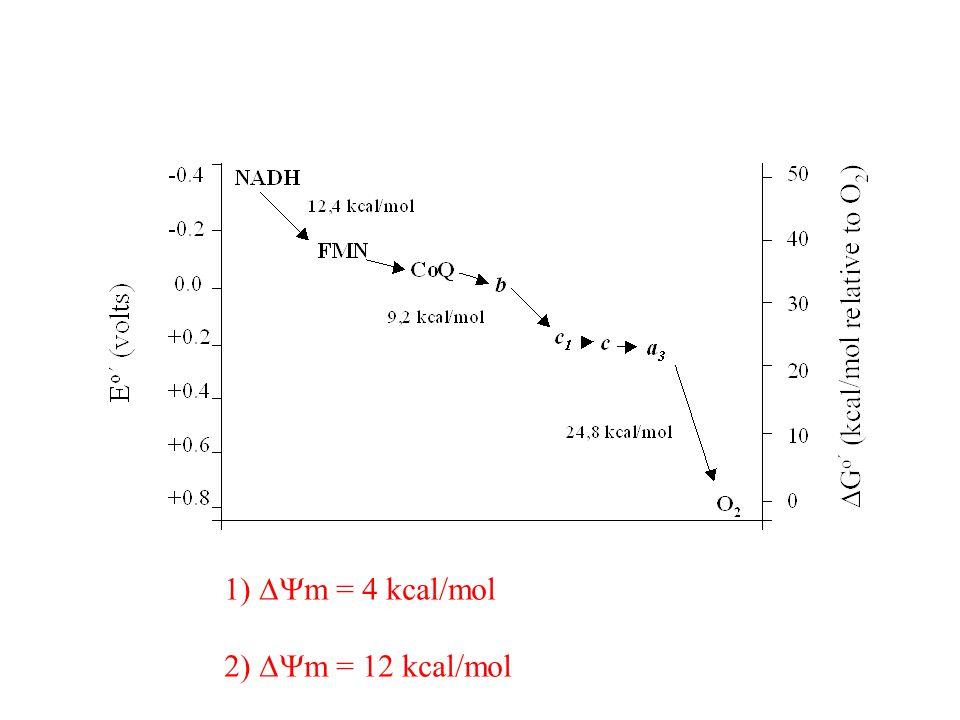  m = 4 kcal/mol  m = 12 kcal/mol