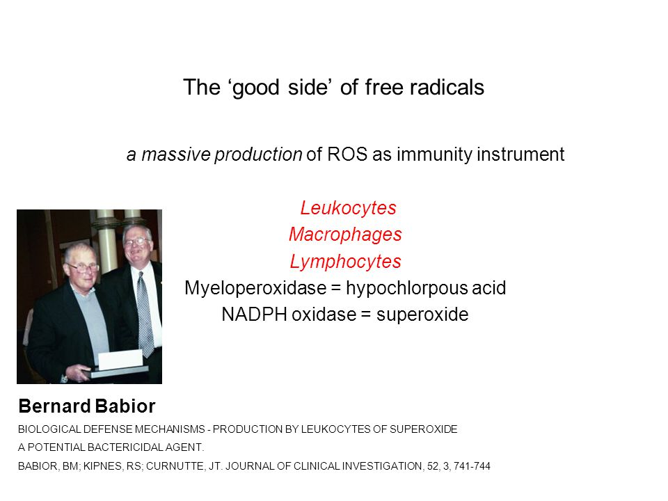 The 'good side' of free radicals a massive production of ROS as immunity instrument Leukocytes Macrophages Lymphocytes Myeloperoxidase = hypochlorpous acid NADPH oxidase = superoxide Bernard Babior BIOLOGICAL DEFENSE MECHANISMS - PRODUCTION BY LEUKOCYTES OF SUPEROXIDE A POTENTIAL BACTERICIDAL AGENT.
