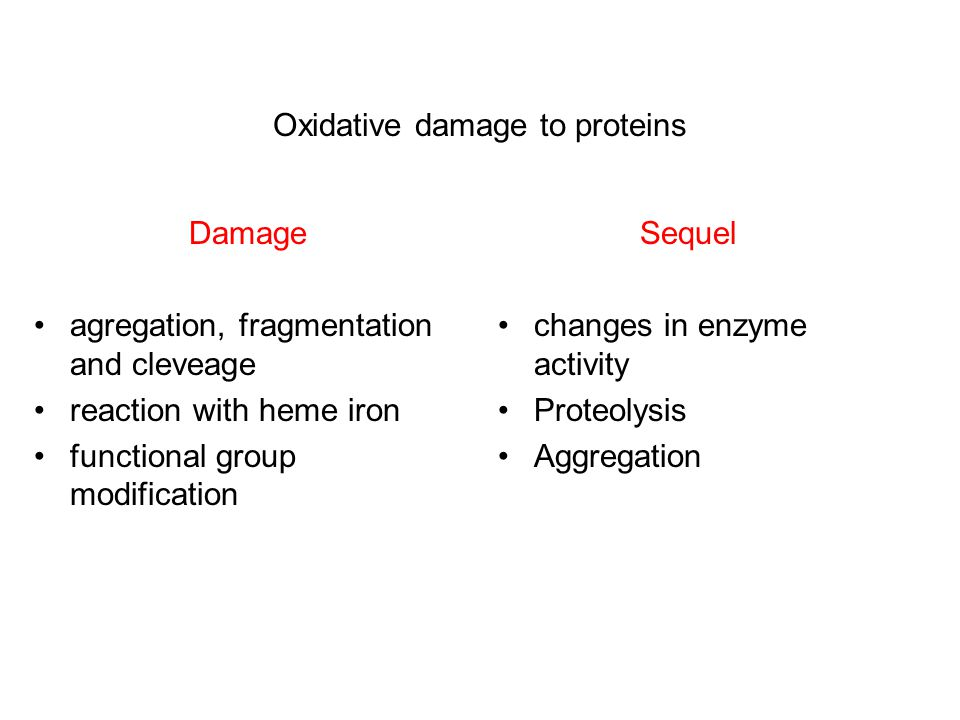 Oxidative damage to proteins Damage agregation, fragmentation and cleveage reaction with heme iron functional group modification Sequel changes in enzyme activity Proteolysis Aggregation