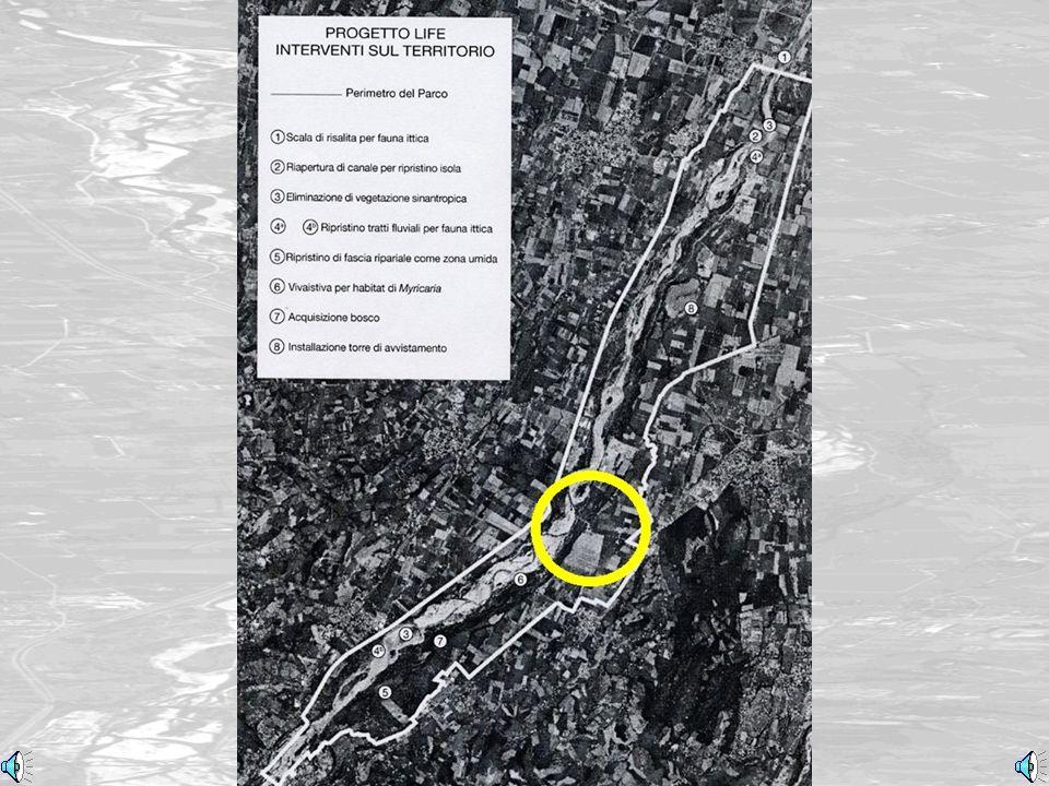 Localizzazione (Location)