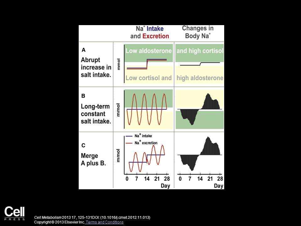 Cell Metabolism 2013 17, 125-131DOI: (10.1016/j.cmet.2012.11.013) Copyright © 2013 Elsevier Inc.