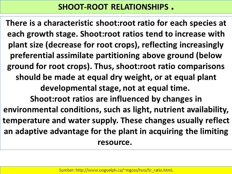 SHOOT-ROOT RELATIONSHIPS. Sumber: http://www.uoguelph.ca/~mgoss/two/Sr_ratio.html.