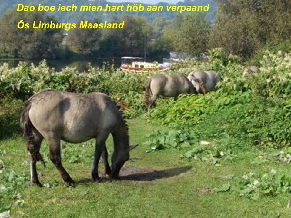 Heij wil iech woene heij aan de Maas Dat stökske Limburg heij aan de Maas