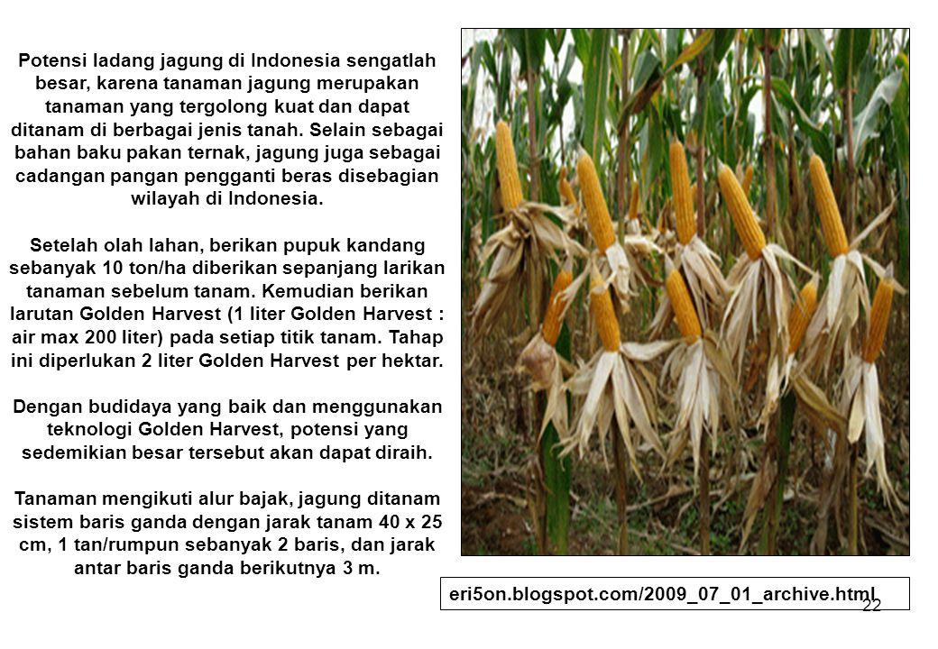 22 Potensi ladang jagung di Indonesia sengatlah besar, karena tanaman jagung merupakan tanaman yang tergolong kuat dan dapat ditanam di berbagai jenis