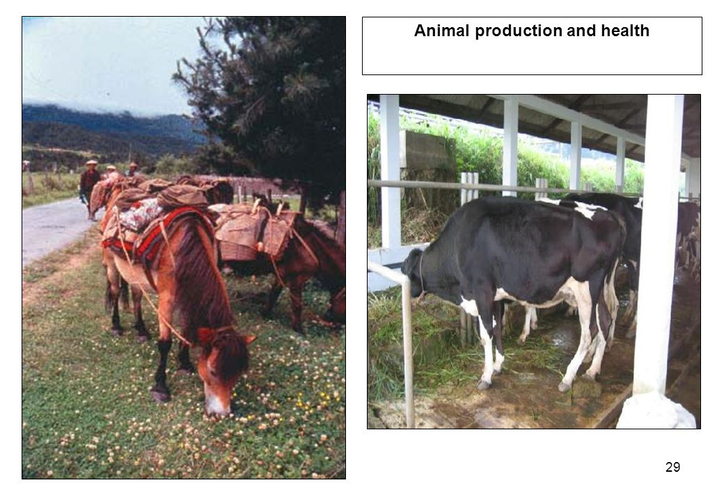 29 Animal production and health