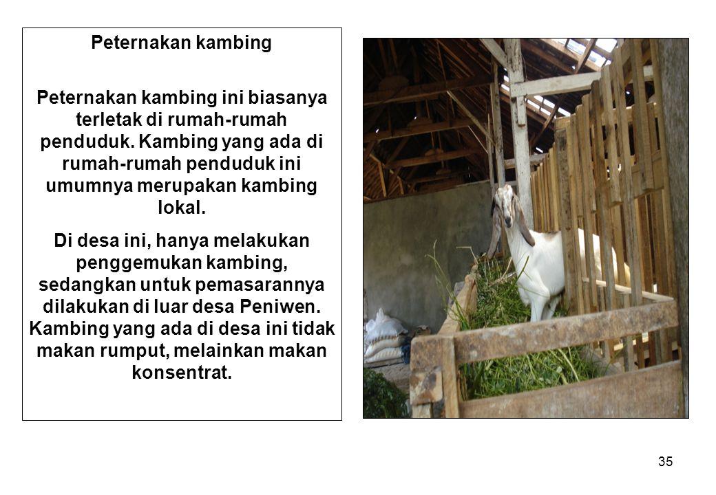 35 Peternakan kambing Peternakan kambing ini biasanya terletak di rumah-rumah penduduk. Kambing yang ada di rumah-rumah penduduk ini umumnya merupakan