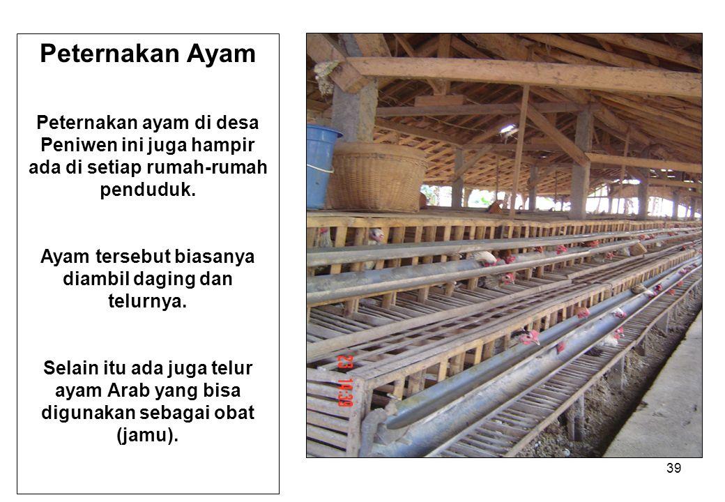 39 Peternakan Ayam Peternakan ayam di desa Peniwen ini juga hampir ada di setiap rumah-rumah penduduk. Ayam tersebut biasanya diambil daging dan telur