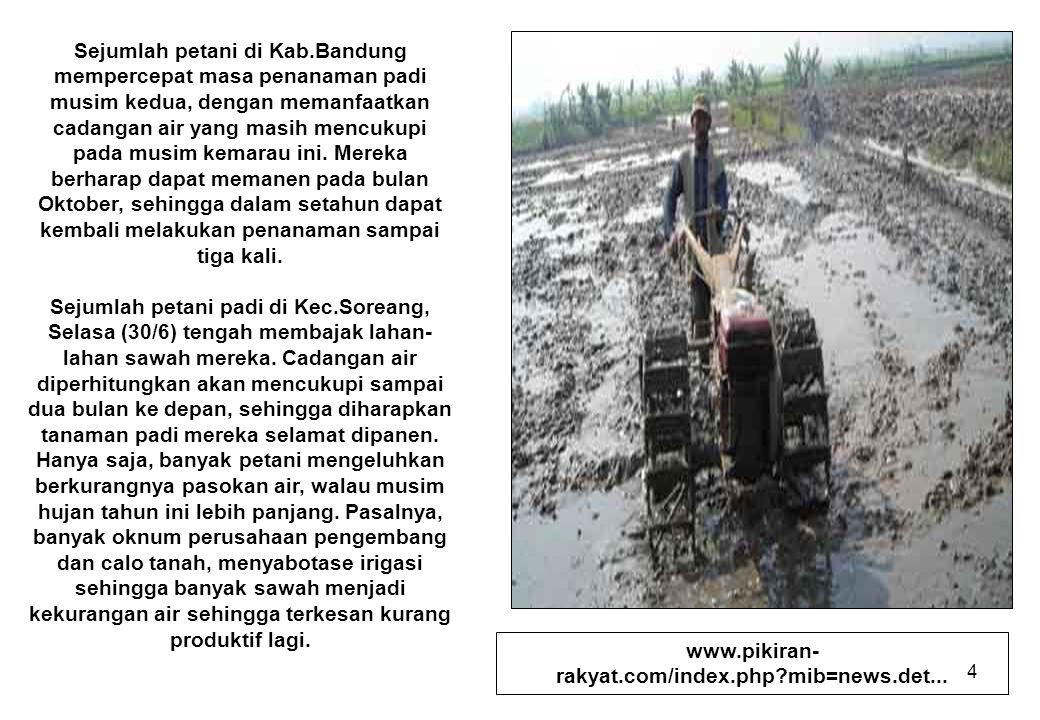4 Sejumlah petani di Kab.Bandung mempercepat masa penanaman padi musim kedua, dengan memanfaatkan cadangan air yang masih mencukupi pada musim kemarau