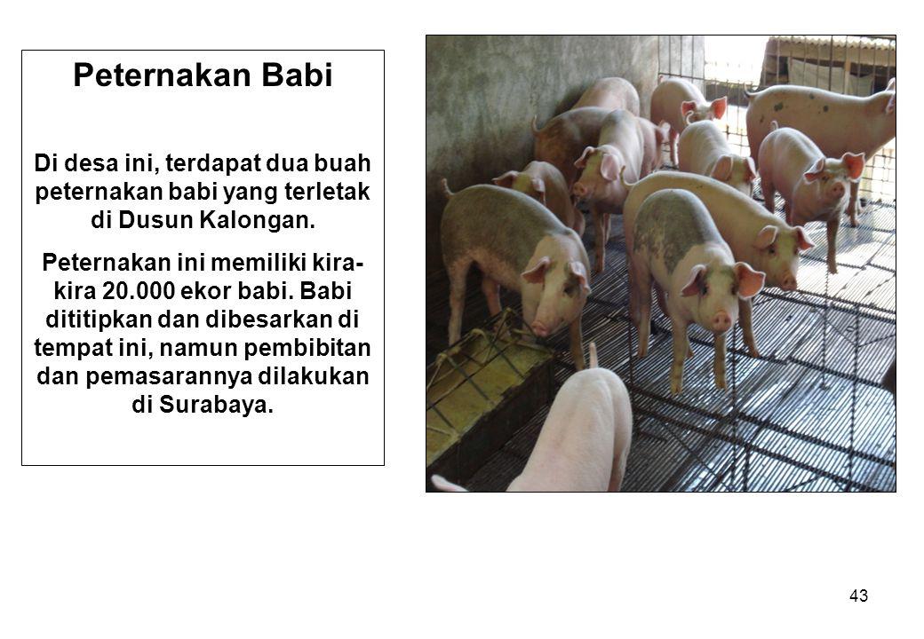 43 Peternakan Babi Di desa ini, terdapat dua buah peternakan babi yang terletak di Dusun Kalongan. Peternakan ini memiliki kira- kira 20.000 ekor babi
