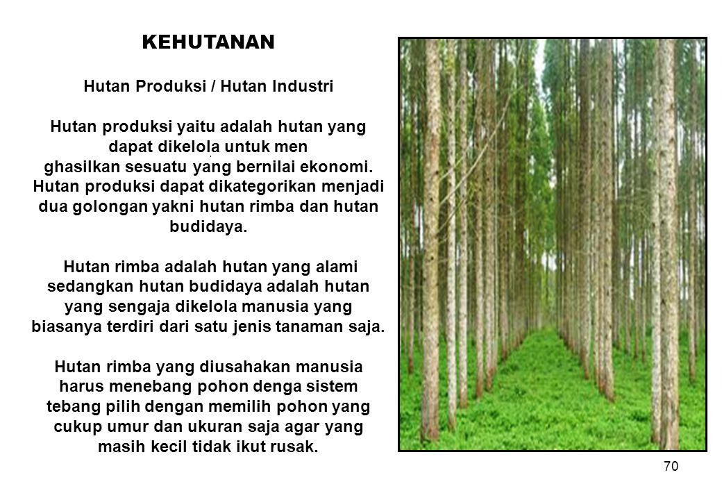 70 KEHUTANAN Hutan Produksi / Hutan Industri Hutan produksi yaitu adalah hutan yang dapat dikelola untuk men ghasilkan sesuatu yang bernilai ekonomi.