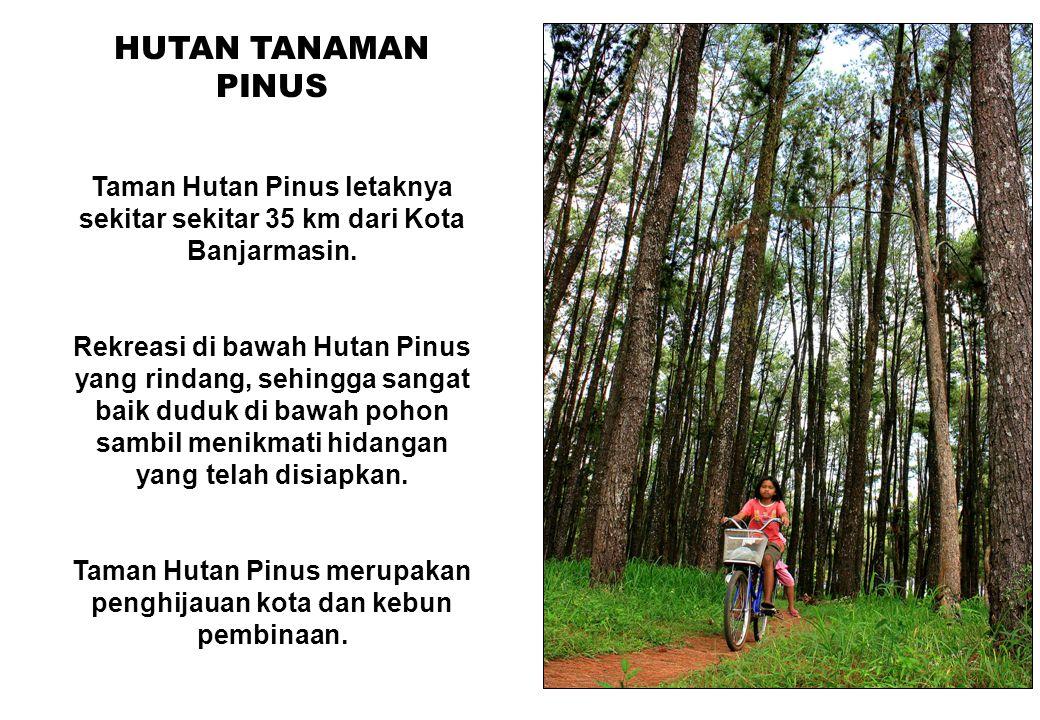 76 HUTAN TANAMAN PINUS Taman Hutan Pinus letaknya sekitar sekitar 35 km dari Kota Banjarmasin. Rekreasi di bawah Hutan Pinus yang rindang, sehingga sa