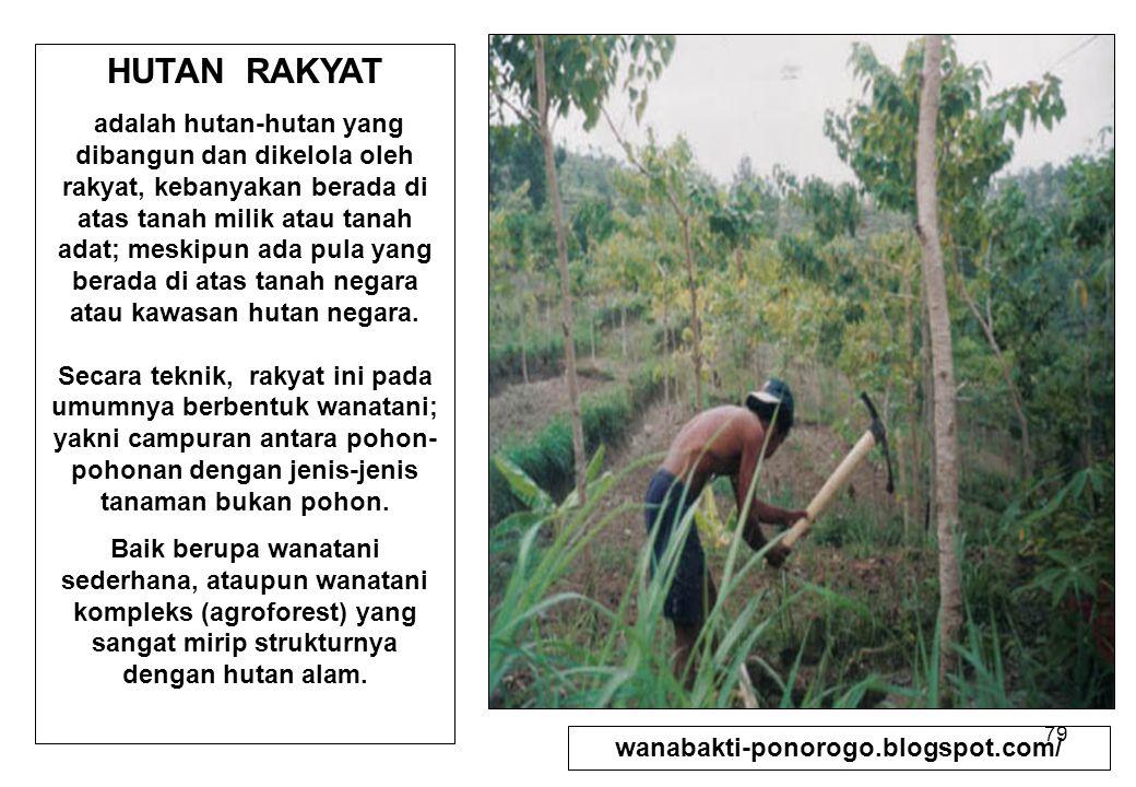 79 HUTAN RAKYAT adalah hutan-hutan yang dibangun dan dikelola oleh rakyat, kebanyakan berada di atas tanah milik atau tanah adat; meskipun ada pula ya