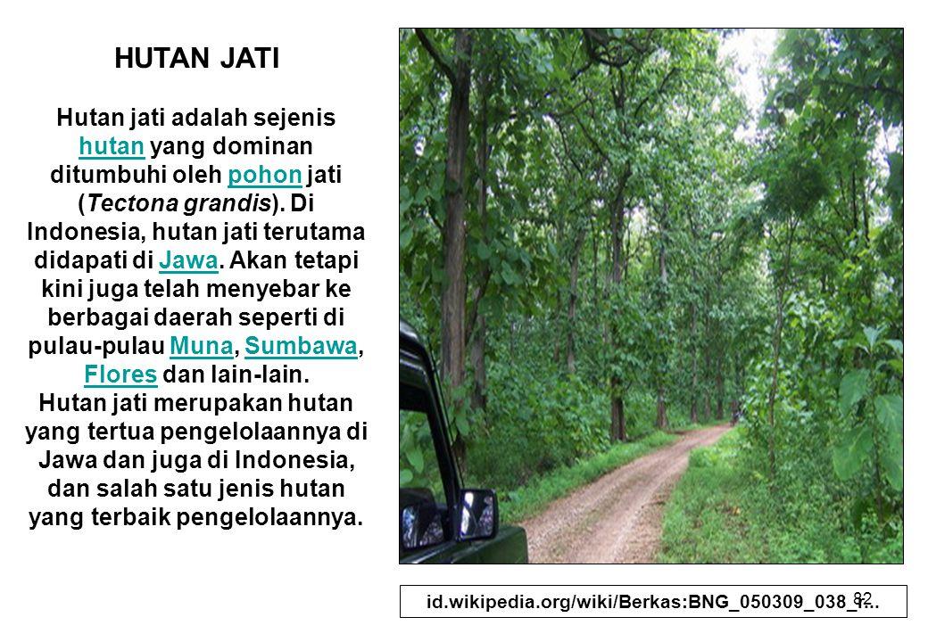 82 HUTAN JATI Hutan jati adalah sejenis hutan yang dominan ditumbuhi oleh pohon jati (Tectona grandis). Di Indonesia, hutan jati terutama didapati di