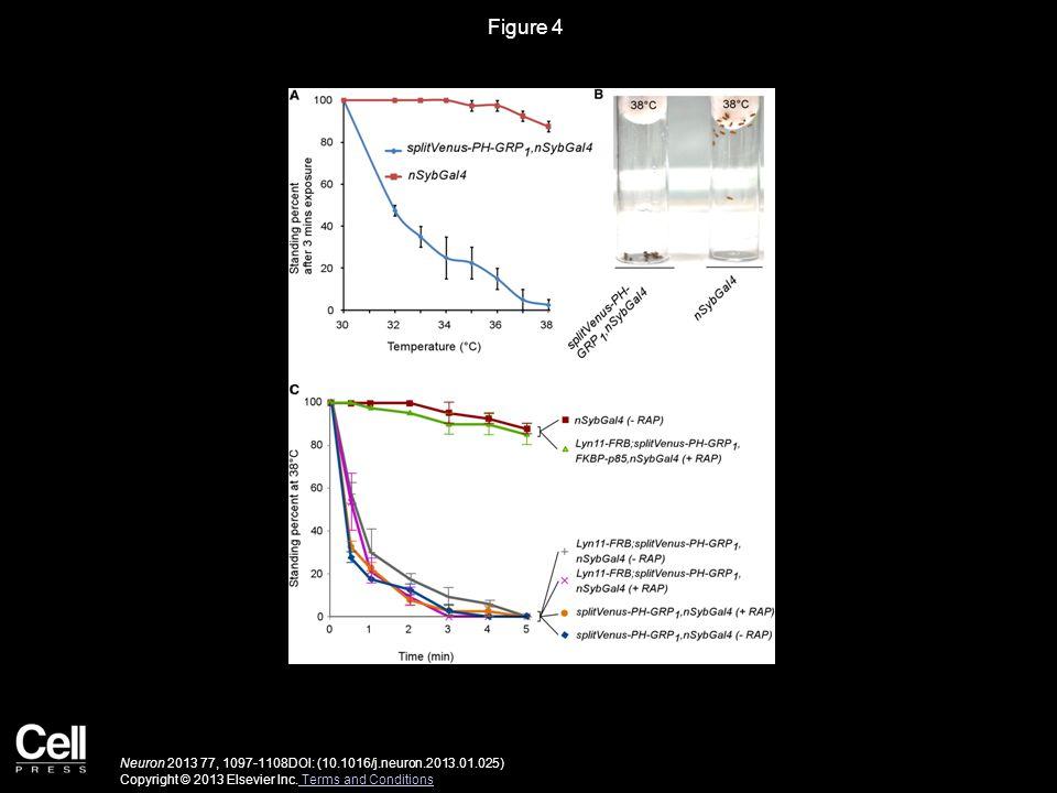 Figure 4 Neuron 2013 77, 1097-1108DOI: (10.1016/j.neuron.2013.01.025) Copyright © 2013 Elsevier Inc.