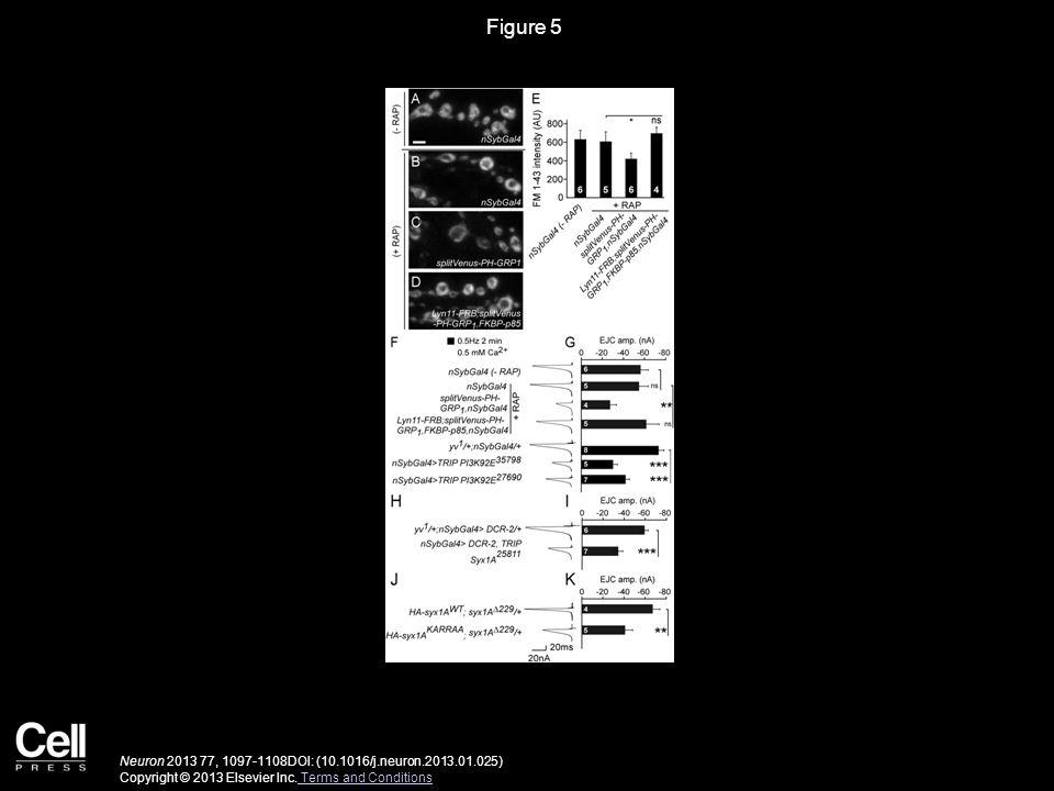 Figure 5 Neuron 2013 77, 1097-1108DOI: (10.1016/j.neuron.2013.01.025) Copyright © 2013 Elsevier Inc.
