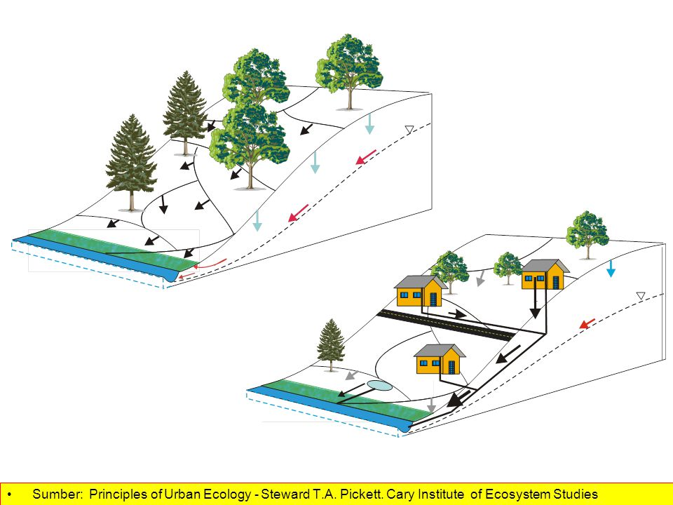 Pickett, Cadenasso (2008) Sumber: Principles of Urban Ecology - Steward T.A.