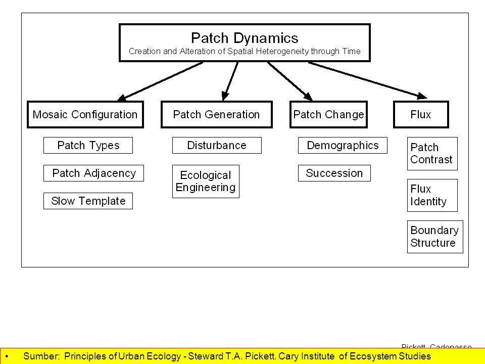 Patch dynamics 1.Applies to cities 2.Hierarchical 3.Gradients and fields Sumber: Principles of Urban Ecology - Steward T.A.