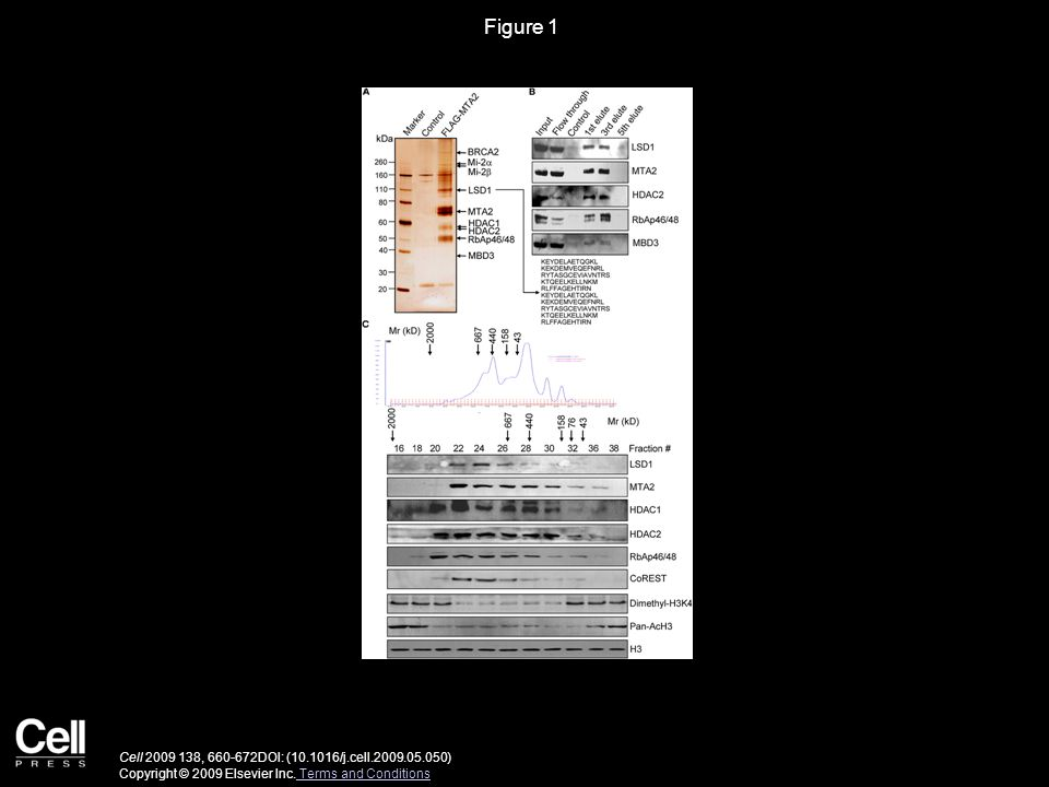 Figure 2 Cell 2009 138, 660-672DOI: (10.1016/j.cell.2009.05.050) Copyright © 2009 Elsevier Inc.