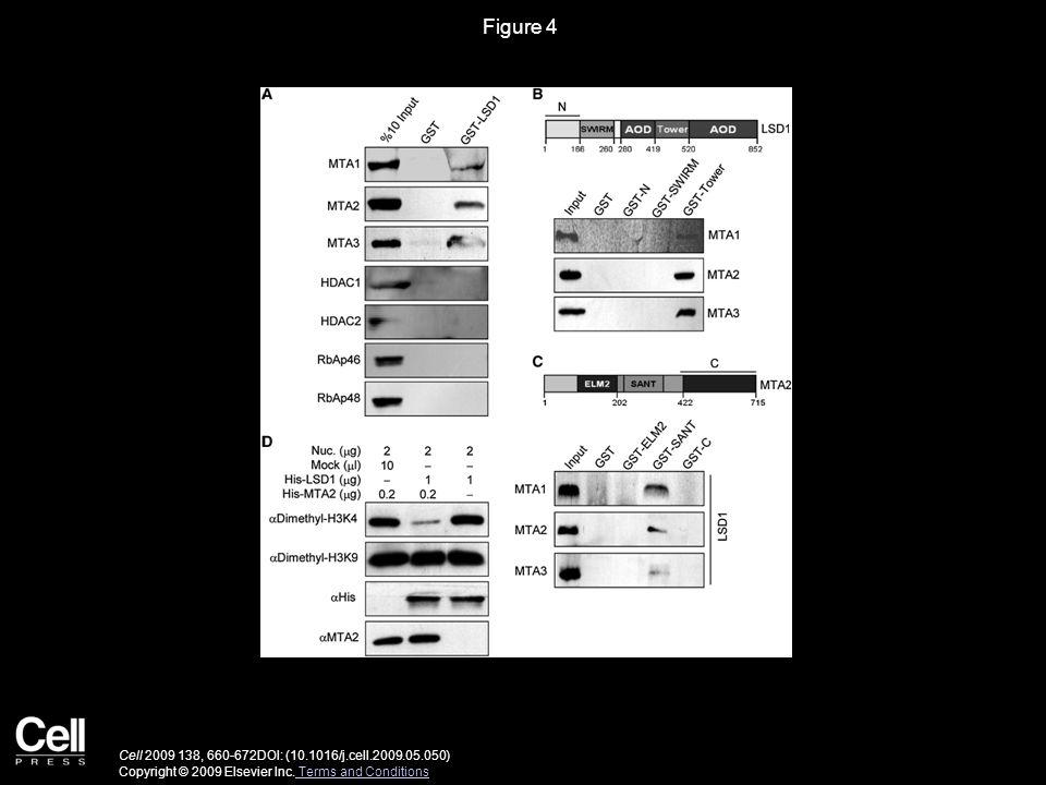 Figure 5 Cell 2009 138, 660-672DOI: (10.1016/j.cell.2009.05.050) Copyright © 2009 Elsevier Inc.