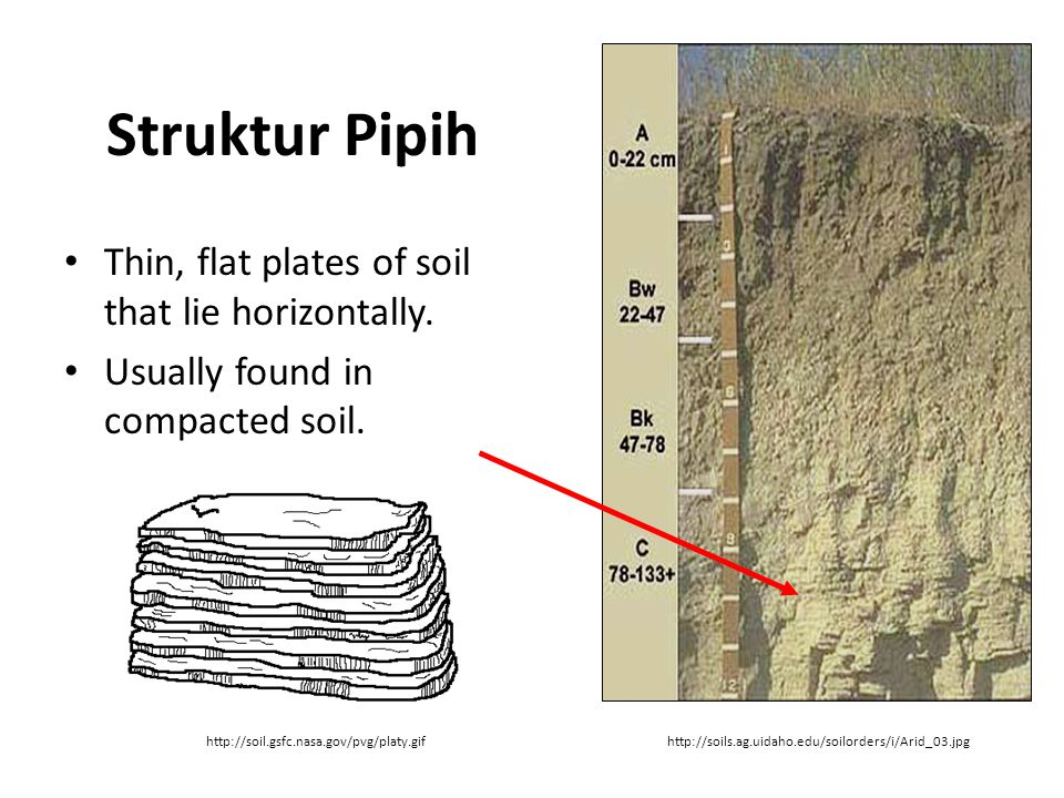 Struktur Pipih Thin, flat plates of soil that lie horizontally. Usually found in compacted soil. http://soil.gsfc.nasa.gov/pvg/platy.gifhttp://soils.a