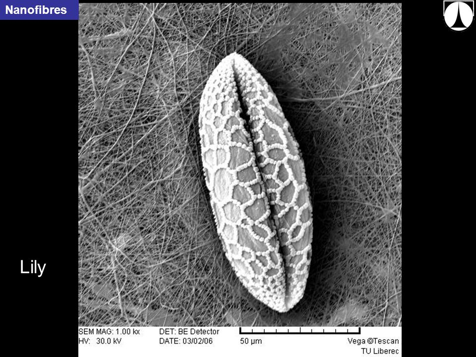 33 Lily Nanofibres