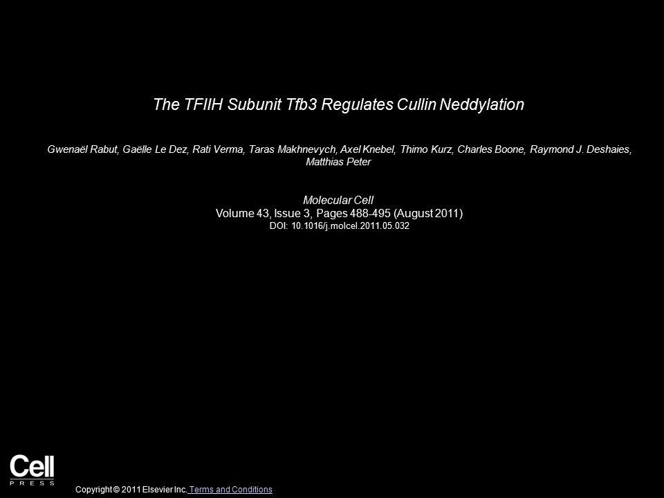 The TFIIH Subunit Tfb3 Regulates Cullin Neddylation Gwenaël Rabut, Gaëlle Le Dez, Rati Verma, Taras Makhnevych, Axel Knebel, Thimo Kurz, Charles Boone, Raymond J.