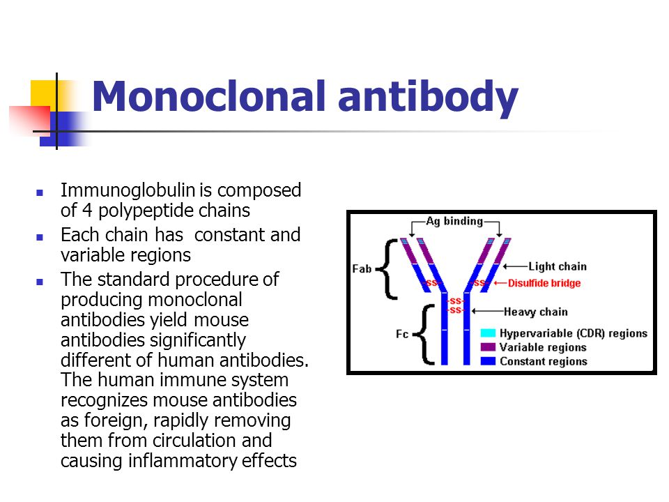 Immunoglobulin is composed of 4 polypeptide chains Each chain has constant and variable regions The standard procedure of producing monoclonal antibodies yield mouse antibodies significantly different of human antibodies.