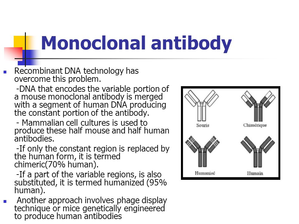 Monoclonal antibody Recombinant DNA technology has overcome this problem.